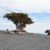 boom bij gronden